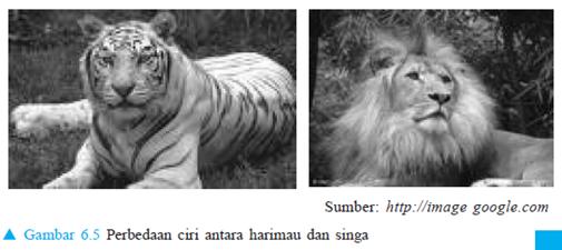 Perbedaan singa dan harimau