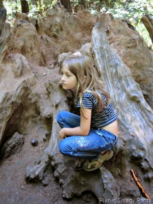 Redwood Stump