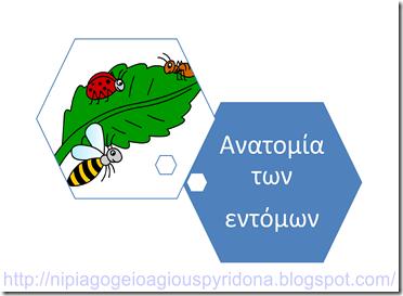 entoma_anatomia1