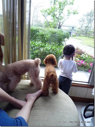 宜蘭三星樂狗堡-小孩與狗
