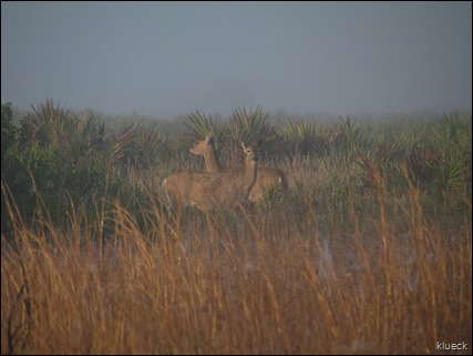 two deer on prairie