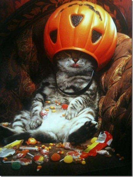 funny-cat-is-the-king-of-halloween