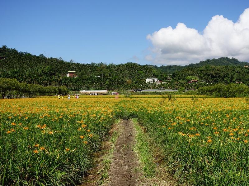 2013_0825 頭社活盆地賞金針花,順遊頭社水庫_041