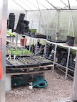 A greenhouse lets new sprouts get started.