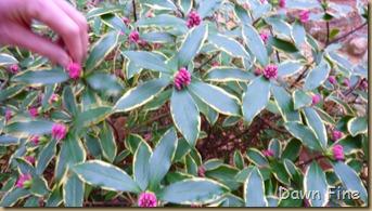 Sandhill Horticultural Garden_023