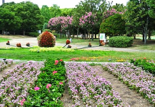7c a- Glória Ishizaka - Jardim Botânico Nagai - Osaka