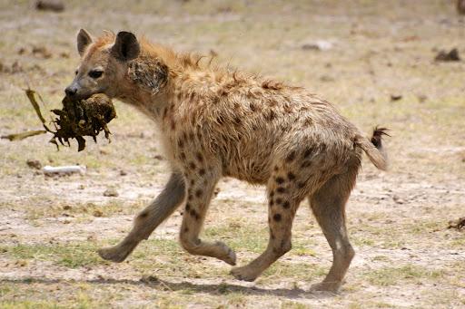 Top 10 animais com os piores odores da natureza!