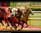Cardinal-Jockey.jpg