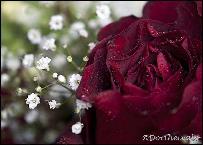 roseibrudeslør