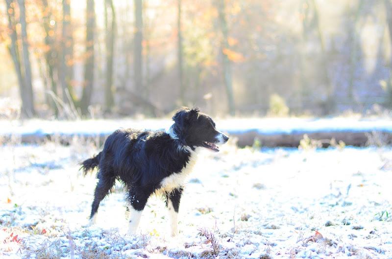 snow dog-3492