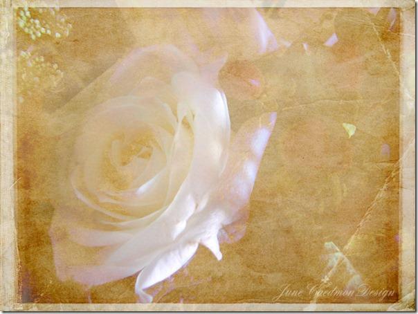 Rose_textured