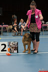 20130510-Bullmastiff-Worldcup-0174.jpg