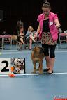 20130510-Bullmastiff-Worldcup-0174.jpg
