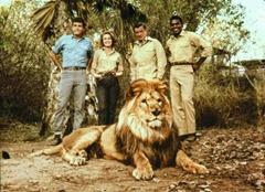 daktaritvshow-wordpress-com-yale-summers-jack-dane-hari-rhodes-mike-makula-marshall-thompson-dr-marsh-tracy-clarence-the-cross-eyed-lion-daktari