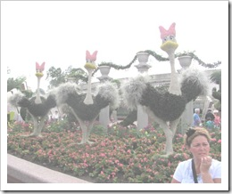 Florida vacation Epcot beginning ostriches and Terry