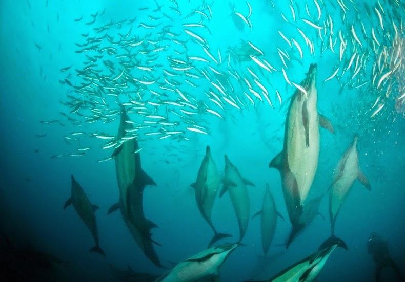 sardines-run-18