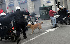 Whether this canine protester is one dog or many, he is  a symbol for many a mixed breed stray who....