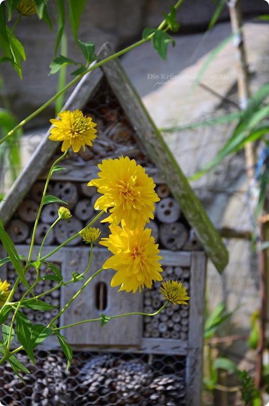 Wremen 29.07.14 Zoo am Meer Bremerhaven 25 Insektenhaus