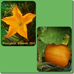 Pumpkin and flower 2012