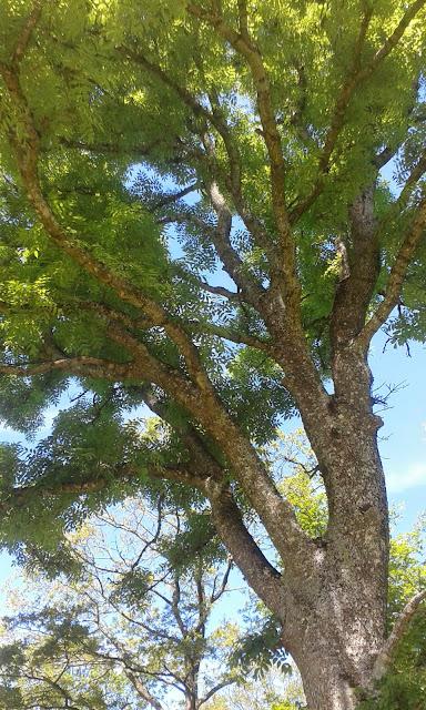 Sösdala, blommor, Fredriksberg, träd