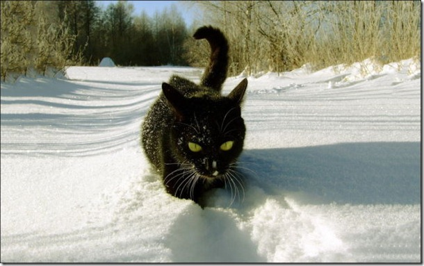 cats-play-snow-10