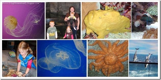 Field Trip - Aquarium