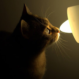 Si becul are miros ! Sau mai simplu ,, Divul by Matei Alexandru - Animals - Cats Portraits
