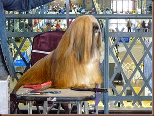 Springfield IL-Dog Show