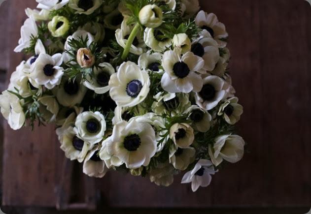 anemones IMG_4422-700x466 floret