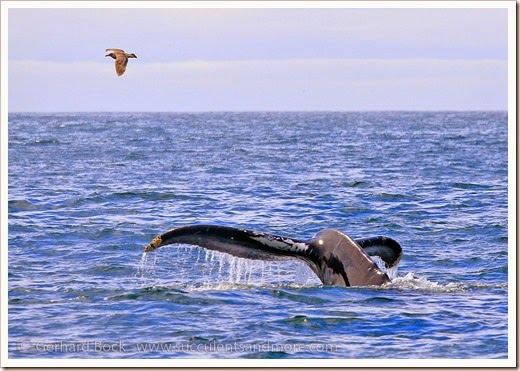 140325_Monterey_0083