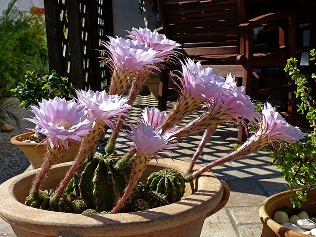 kaktus_05