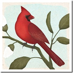 an american cardinal_thumb[3]