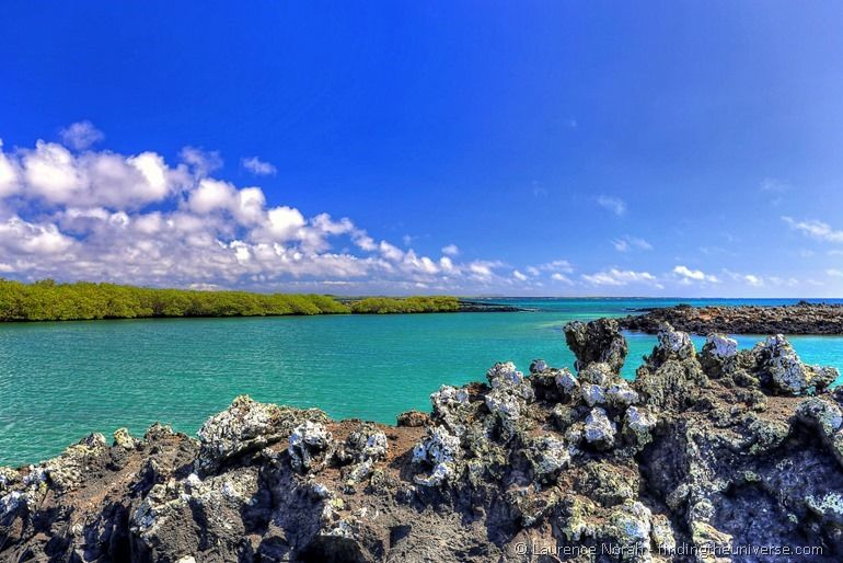 Lavaformation im Meer, Insel Isabela, Galapagos