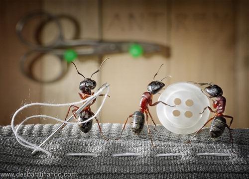 formigas inacreditaveis incriveis desbaratinando  (24)