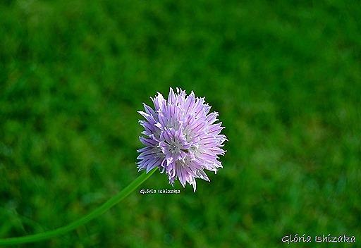 Azul - Glória Ishizaka 35