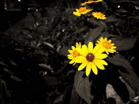 25. Flores amarillas