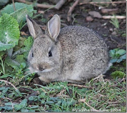3 bunny-6