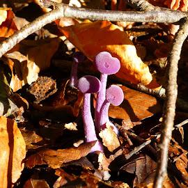 by Patricia Vleeming - Nature Up Close Mushrooms & Fungi ( fall, color, colorful, nature )
