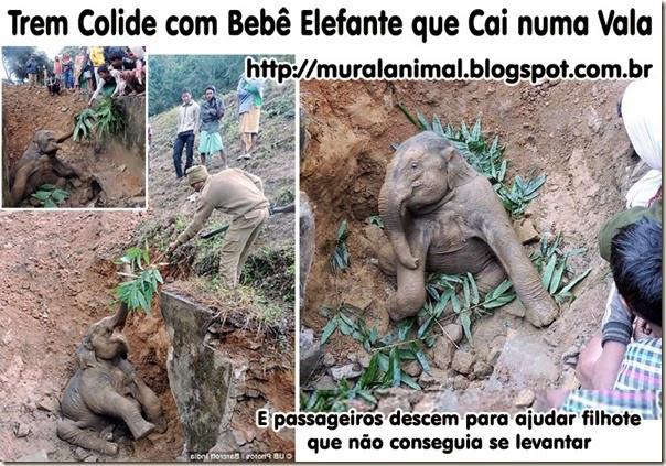Elefante-bebe-2