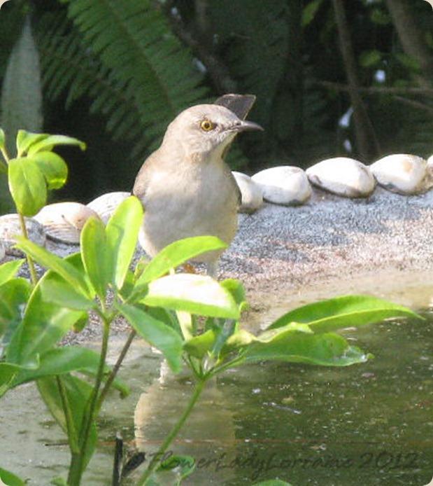 11-04-mockingbird3