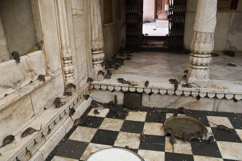 karni-mata-temple-6