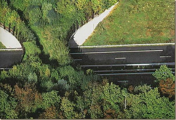 Ponts pour animaux - passages à faune (20)