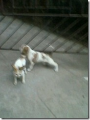 kitten_and_puppies_playing (4)