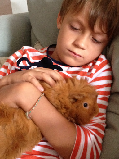 Joey (age 6) with rescued guinea pig Sparky on the night of Sparky's rescue when Joey first put him to bed. Joey was shhhing and rocking him to sleep. The moment they met  - Sparky ran to Joey and cuddled into the leg of his shorts.