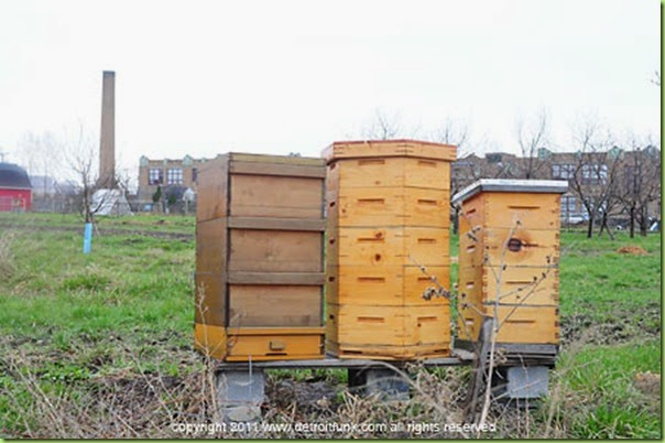 bee hives detroit
