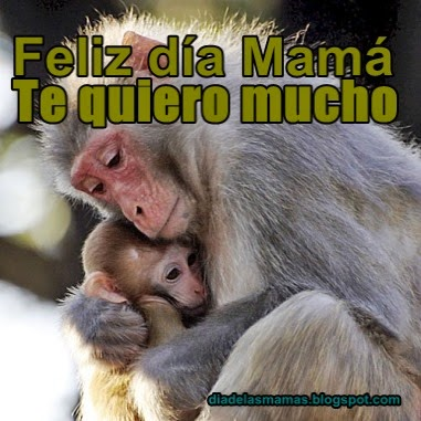 te quiero mama 5