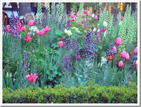 gorgeous spring blooms tivoli
