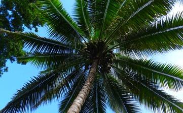 __Hawaii_221