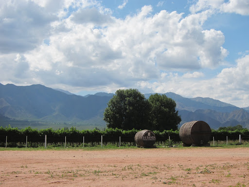 Vineyards and the mountains surrounding the Cafayate Valley.
