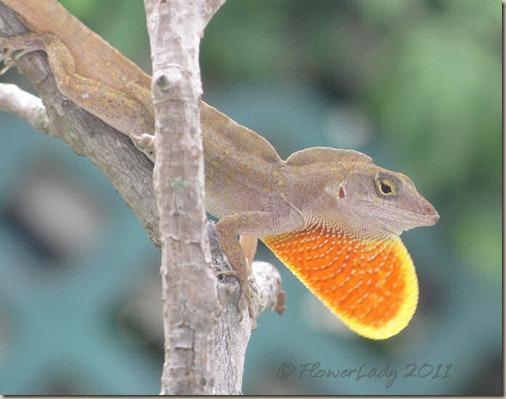 07-17-lizard